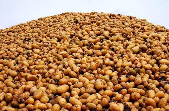 Clarebout Potatoes : la piste de la fièvre de Pontiac