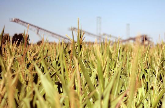 OGM : pas de risque à court terme pour la santé