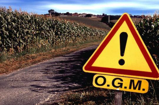 Les OGM « empoisonnent » les chercheurs