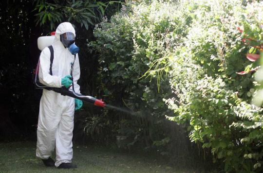 17 cas de dengue : plan Orsec à La Réunion