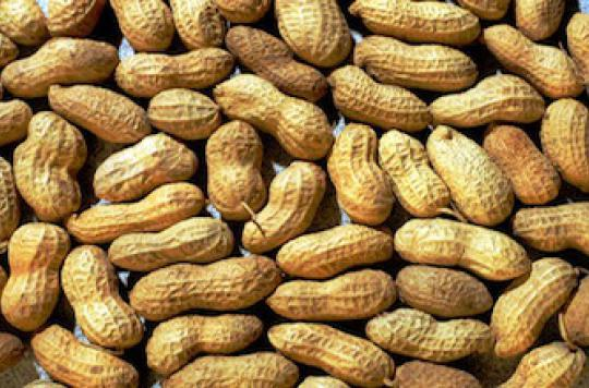 Désensibilisation réussie contre l'allergie à la cacahuète
