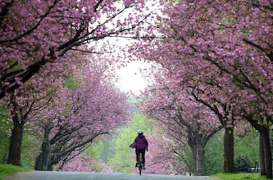 Asthme: le cycle menstruel peut aggraver les crises
