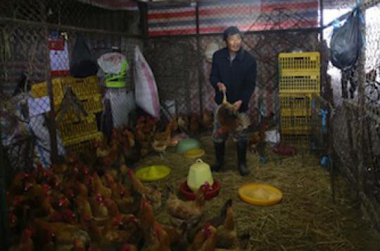 H7N9 : les conditions d\'une transmission interhumaine sont réunies