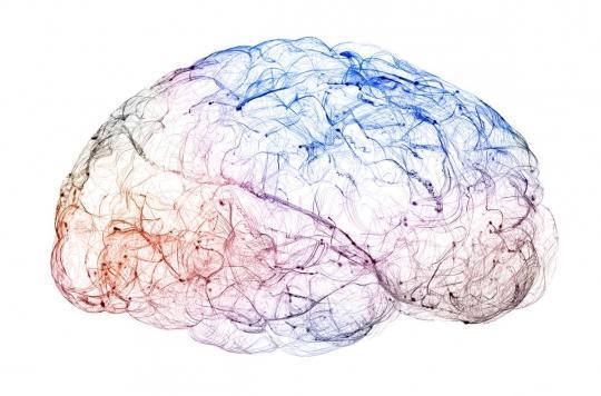 Microcéphalie : une clé trouvée pour restaurer la croissance du cerveau