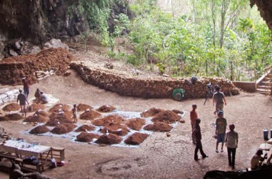 L'homme de Florès aurait disparu il y a 50 000 ans