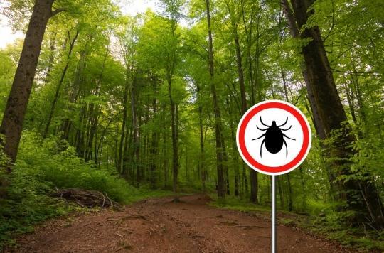 Maladie de Lyme : un mécanisme \
