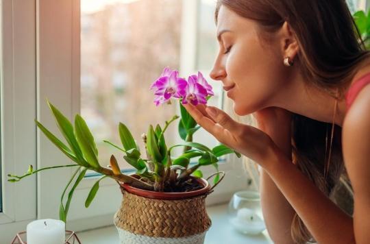 L'odorat peut-il soigner les maladies mentales ?