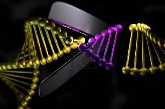 Ciseaux génétiques : la Chine devance les Etats-Unis