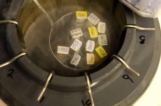 L'Académie de médecine favorable à l'autoconservation d'ovocytes
