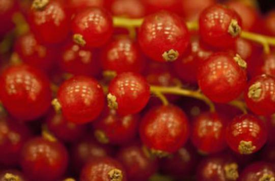 Hépatite A : des baies rouges contaminent 9 personnes