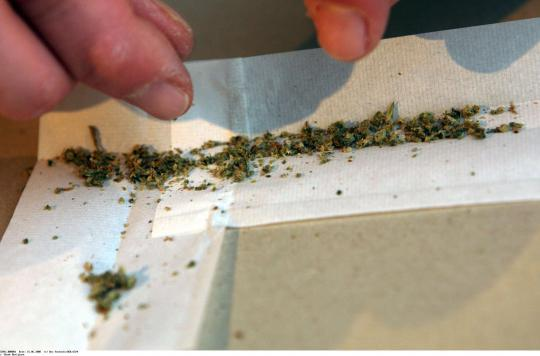 Des fumeurs de cannabis auscultés par des caméras
