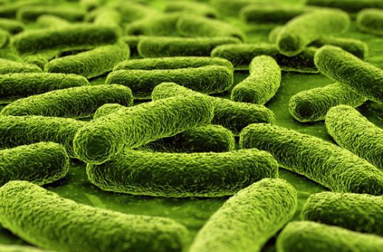 Maladies cutanées : une bactérie clé découverte dans le microbiote