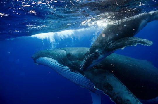 Les souris ont des spermatozoïdes plus grands que ceux des baleines