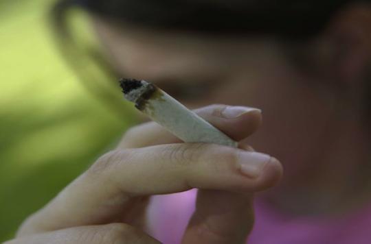 Usage du cannabis: les spécialistes  font appel à François Hollande