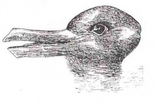 Lapin Ou Canard Cette Illusion D Optique En Dirait Long Sur Votre