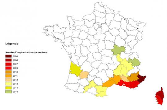 Moustique tigre : 486 cas suspects de dengue et de chikungunya en métropole