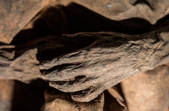 Variole : de l'ADN viral retrouvé dans une momie du 17e siècle