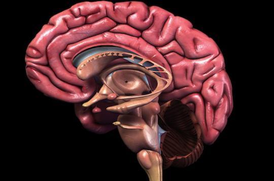 Une jeune fille de 14 ans vit avec une moitié de cerveau