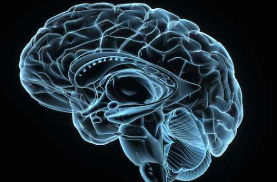 Cerveau : parler deux langues booste la matière grise