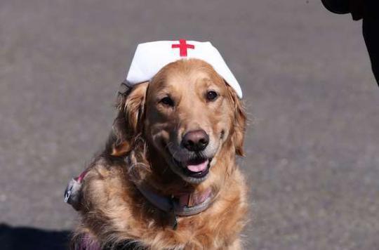 Cancer pédiatrique : la thérapie canine apaise les enfants