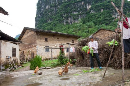 Grippe aviaire : la mutation de la souche H7N9 inquiète la Chine