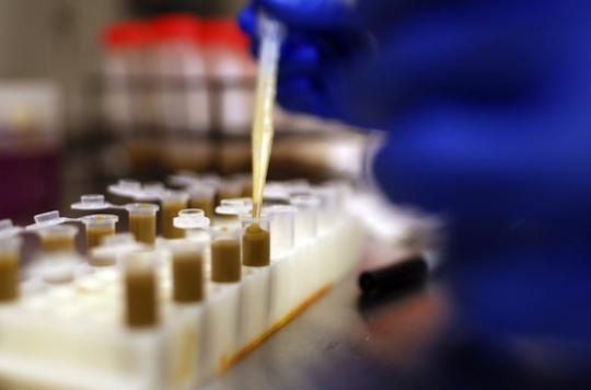 Clostridium difficile : un espoir pour le traitement des infections