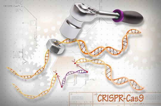 Cancer du poumon : l'édition de gènes testée en Chine