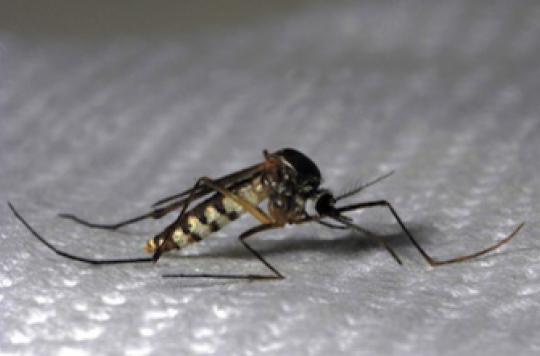 Chikungunya : le nombre de cas a triplé en 3 semaines en métropole