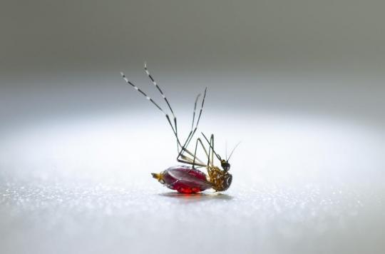 Paludisme : un insecticide oral pour tuer les moustiques par le sang