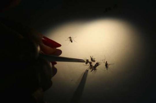 Dengue : un premier vaccin pour protéger les enfants