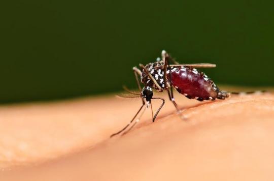 Dengue : dix cas signalés à la Réunion