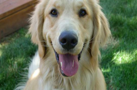 Le chien  protège le coeur de l\'adulte et les oreilles des bébés