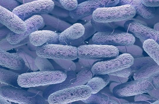 Comment Escherichia coli se joue du système immunitaire