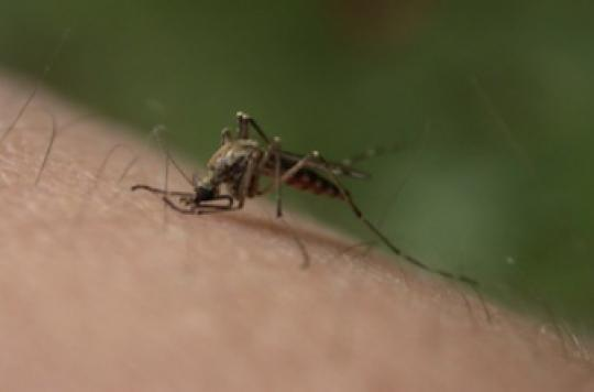 Chikungunya : risque d'épidémie pendant la coupe du monde de football