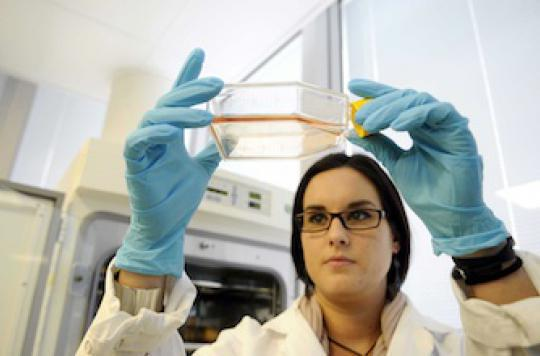 La recherche sur les cellules souches embryonnaires bientôt autorisée