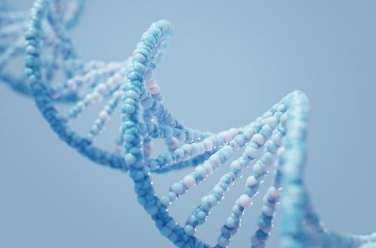 Une variation génétique pourrait expliquer le développement du coronavirus