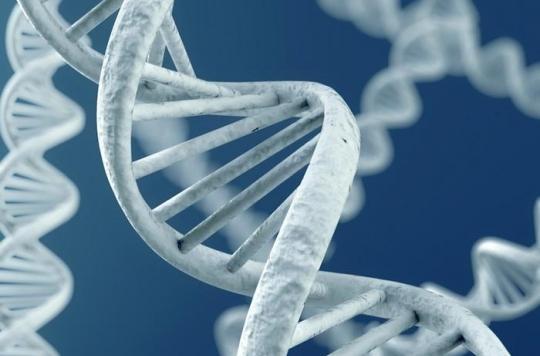 Alzheimer : un test génétique prédit l'âge d'apparition de la maladie