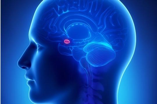 Cerveau : \