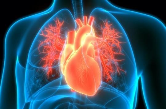 La graisse autour du cœur augmente le risque cardiaque chez les femmes