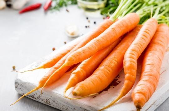 Apport en vitamine A, anti-cholestérol : la carotte est excellente pour la santé, mais pourquoi certains sont privés de ses bienfaits?