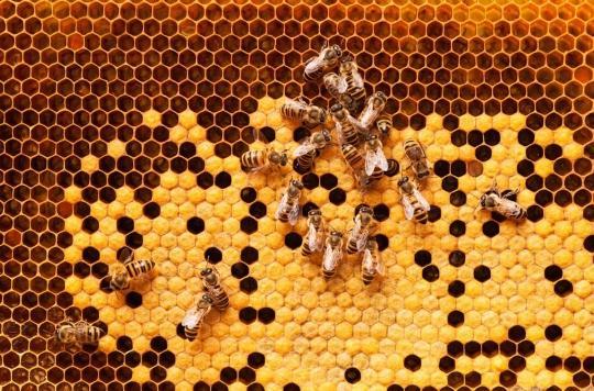Blessures, plaies, maladies : l'incroyable pouvoir des abeilles sur notre santé