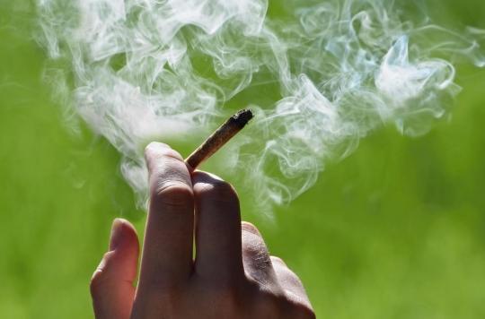 Cannabis : quels effets délétères à 35 ans d'une consommation régulière à l'adolescence ?