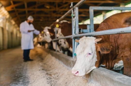 Résistance aux antibiotiques : elle a triplé en 20 ans chez les animaux destinés à l'alimentation