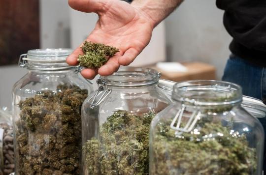 Légalisation du cannabis : le débat relancé sur fond d'échec de la lutte contre le trafic