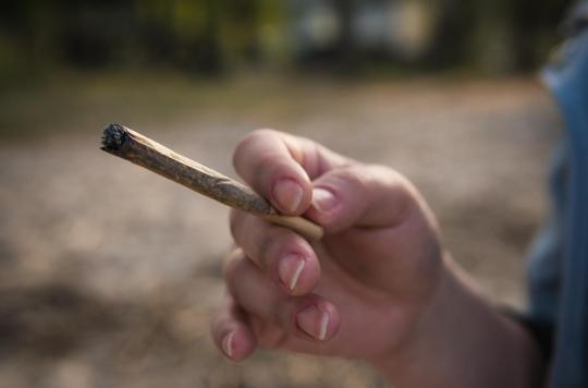 Cannabis: une consommation précoce favorise le déclin cognitif