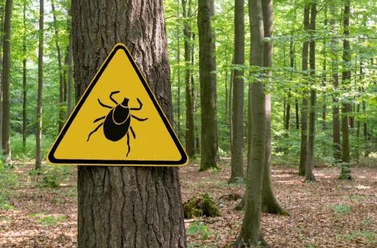 Maladie de Lyme : signaler ses piqûres pour aider à mieux comprendre la maladie