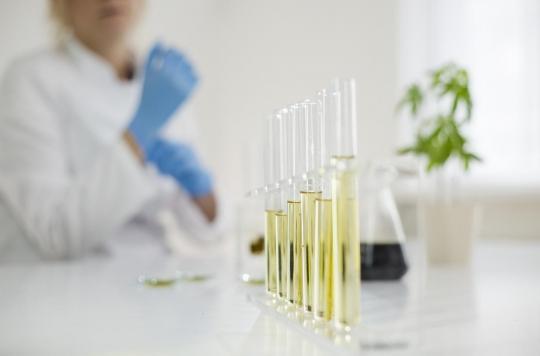Cannabis thérapeutique: un décret donne le feu vert à son expérimentation