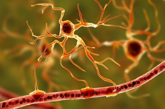 On en sait plus sur le mécanisme qui maintient la plasticité d'un cerveau adulte