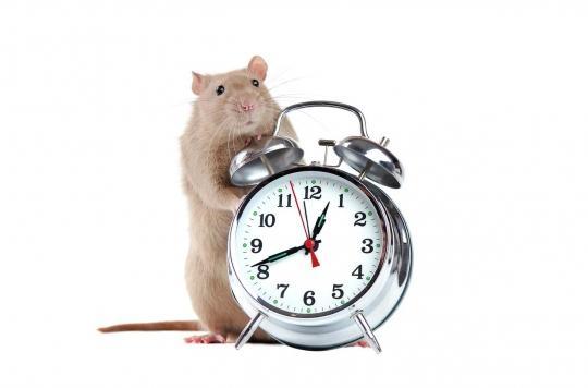 Le temps chez les animaux, une notion liée aux actions et aux mouvements