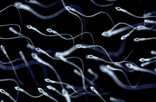 Nutrition : un nouveau programme pour vaincre l'infertilité masculine